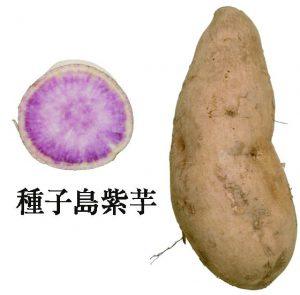 種子島紫芋