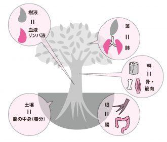 腸内環境の悪化は「汚染された 土に生えた木」と同じ