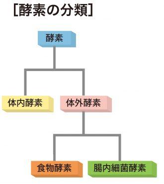 酵素の分類