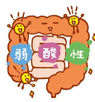腸内を善玉菌がすみやすい弱酸性に保つ