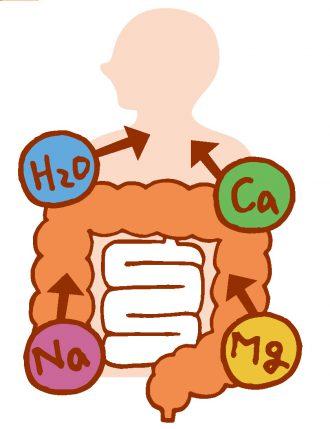 大腸での水・ナトリウム・カリウム・マグネシウムの吸収を促進