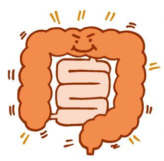 腸のぜん動運動を促進