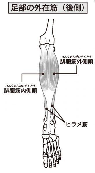 足部の外在筋