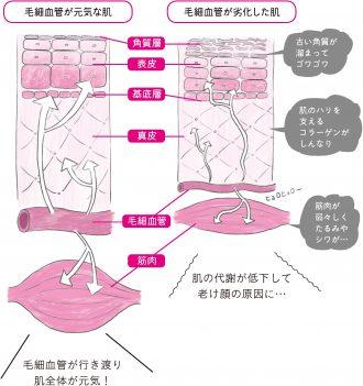 老け顔の原因は毛細血管の劣化