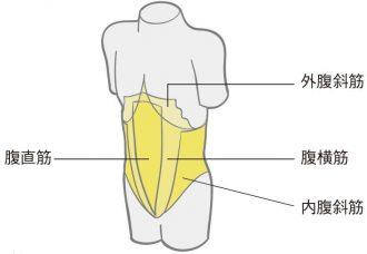 腹筋の種類